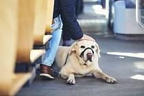 Pes v MHD - Ilustrační foto
