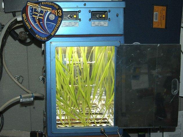 Ječmen na palubě Mezinárodní vesmírné stanice je zachycen na snímku zveřejněném ruským Institutem biomedicínských problémů.  Výsledkem má být kosmické pivo, k jehož výrobě se rozhodli Japonci.