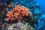 Mořské houby - Ilustrační foto
