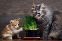 Kočkám vyhovují jakékoli traviny