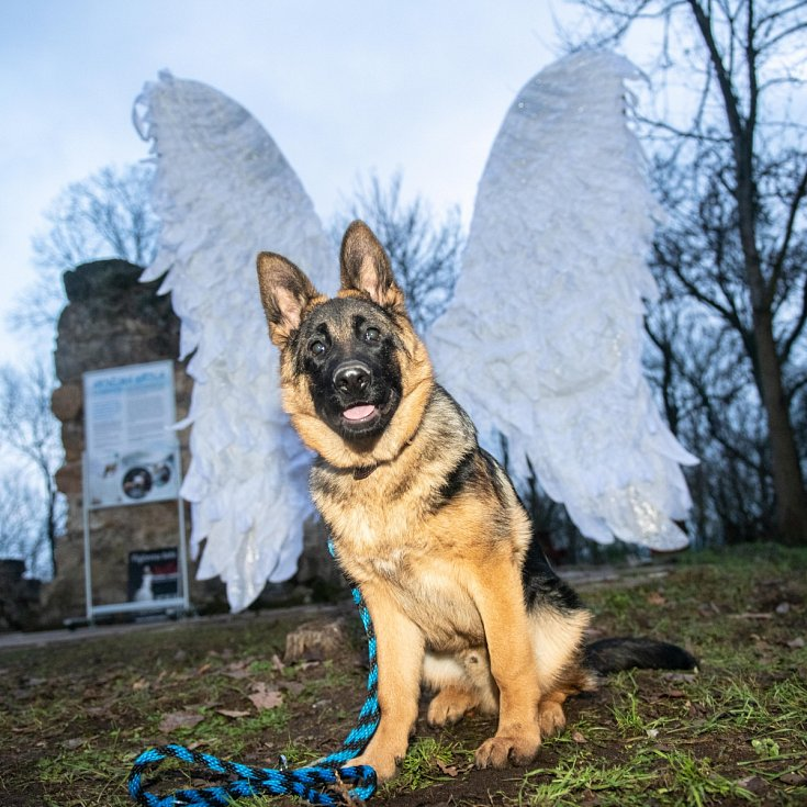 Andělská křídla Holý Vrch.