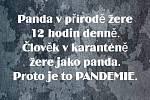 Něco na téma pandemie
