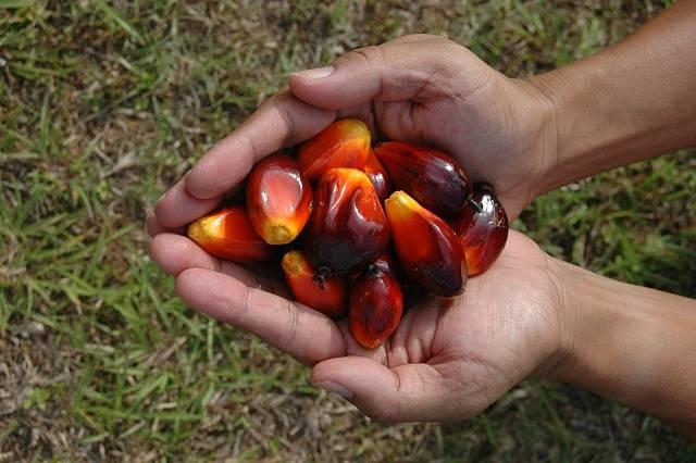 Palmový olej, ilustrační foto