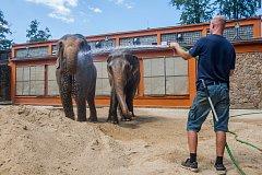 Samice slona indického Bala a Rání se v létě mohou ochladit v nádrži s vodou nebo na sebe hází studený písek. Při velkých vedrech kropí hadicí slony pracovníci zoologické zahrady. Snímek je z 1. srpna.