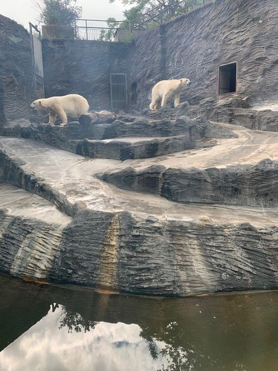 Atraktivní jsou zejména expozice goril, šelem, lachtanů, klokanů, ledních medvědů a hlavně slonů, kde mají nové přírůstky – dvě malá slůňata.