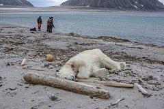 Posádka německé lodi musela ledního medvěda zastřelit.