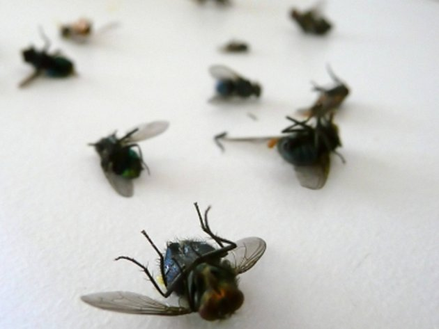 Nejvýše dvě mouchy budou moci poletovat na veřejných toaletách v Pekingu.