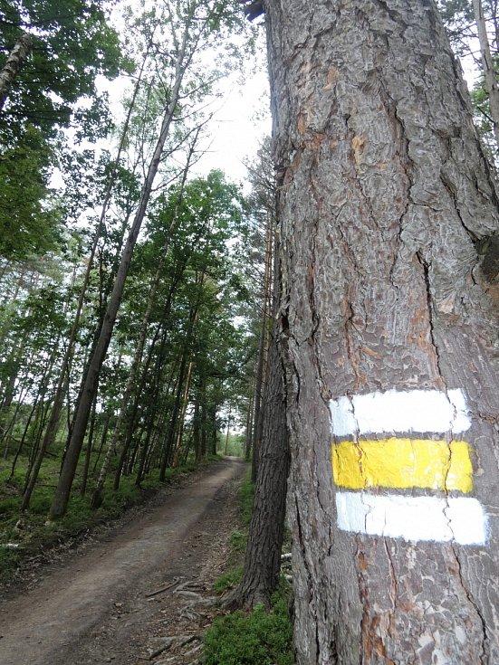 Sem tam najdete v lese cestu. Vede tady i žlutá turistická značka.