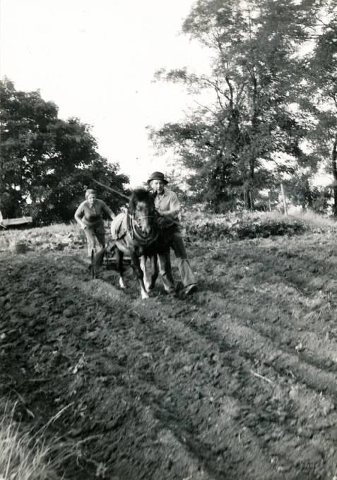 Manželé Jiřina Čechová a Miloslav Kabelka s koněm Jurdou při orání ve Stareči roku 1985