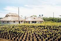 Revitalizace deštného pralesa -Projekt expertů Mendelovy univerzity. Ilustrační foto