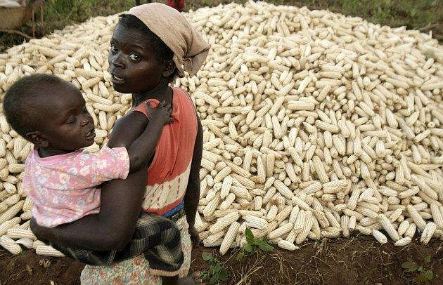 Velká část Afriky žije z kukuřice. Její nedostatek zasáhl i jihoafrické Malawi. Produkce plodiny tu částečně vlivem nepřízně počasí, z části kvůli vysokým cenám hnojiv v loňském roce prudce klesla a torpédovala ceny vysoko nad jejich úroveň z roku 2007.
