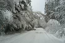 Stromy pod tíhou sněhu. Vysoké Chvojno - Poběžovice u Holic