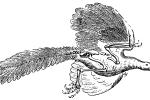 Archeopteryx mivart