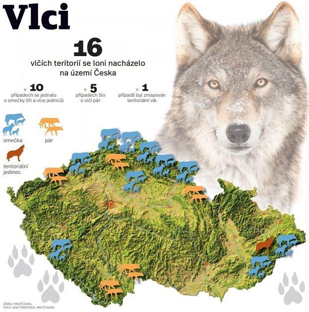 Vlci - Infografika
