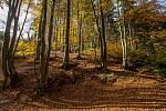 Podzimní příroda - ilustrační foto.