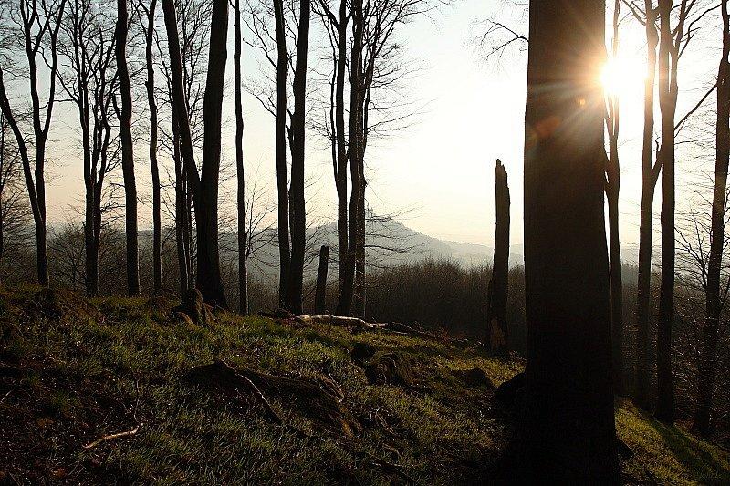 Výhled na Buchlov z Holého kopce