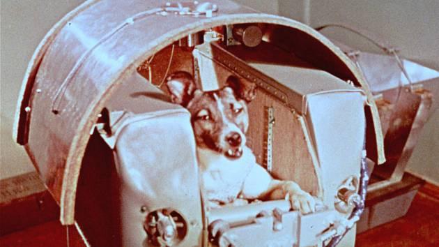Fenka Lajka byla prvním tvorem, kterého Rusové poslali do vesmíru. Teď uvažují o makacích.