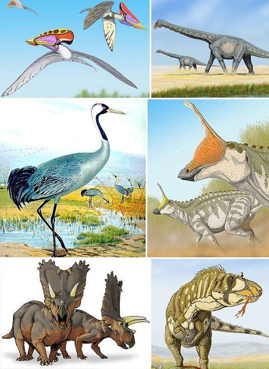 Podle vědců patřil Kongonaphon kely do skupiny pravěkých tvorů Ornithodira, kam se řadí také Alamosaurus, Tsintaosaurus, Daspletosaurus, Titanoceratops, Grus, Tupuxuara