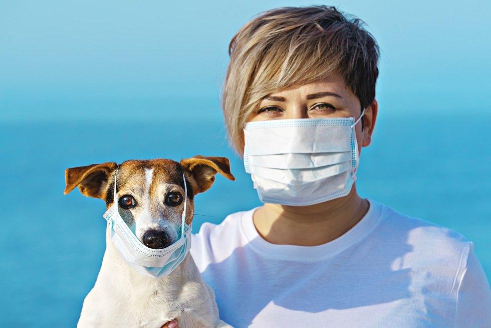 Covidem nakažený člověk totiž, jak výzkumníci zjistili, vylučuje pro psy silný pach.