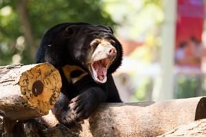 Medvěd baribal