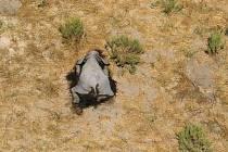 V Botswaně náhle uhynuly stovky slonů. Důvod je zatím neznámý
