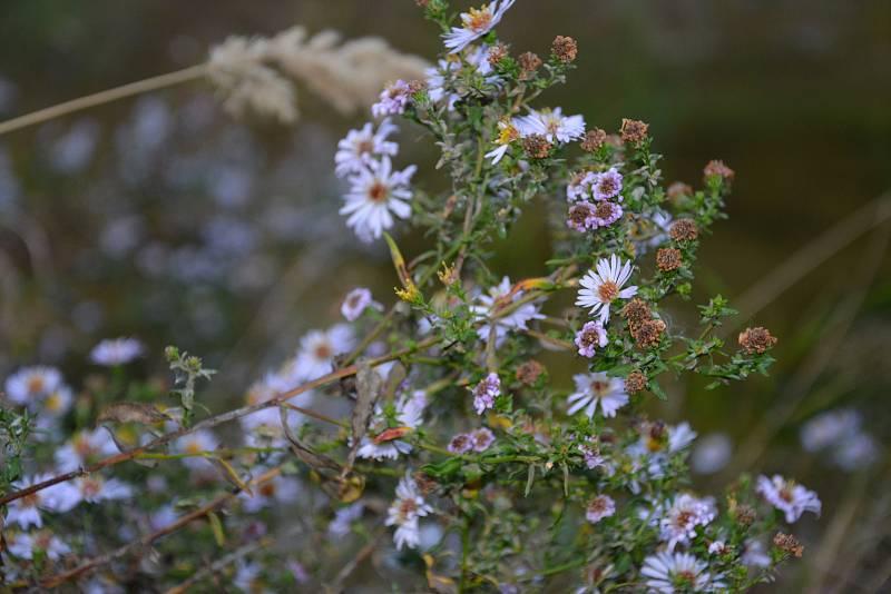 Příroda se vybarvuje typickými podzimními barvami.