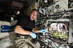 Jak vypadá pěstování ředkviček na Mezinárodní vesmírné stanici. Jedním z úkolů členů mise Crew-1 bylo pěstovat ředkvičky ve vesmíru. Zjišťují tak, jak postupovat, aby si astronauti mohli v kosmu pěstovat i vlastní potraviny.