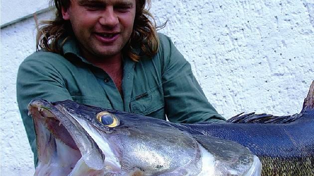 Milan Pojer z Nepomuku na Rožmitálsku vytáhl svůj životní úlovek. Candát má přesně 93 centimetry a váží 8,5 kilogramu.