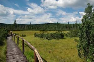 Po dřevěných chodnících se projdete nad rašeliništi a jezírky v národní přírodní rezervaci Rejvíz.