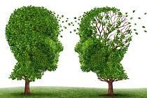 Užívání jinanu dvoulaločného (Ginkgo biloba) nepomáhá zabránit vzniku Alzheimerovy choroby.