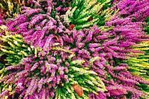 barevná zahrada i v zimě