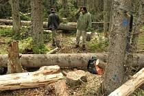 Ekologičtí aktivisté už třetím dnem bránili svou přítomností kácení stromů napadených kůrovcem v lokalitě Ptačí potok u Modravy.