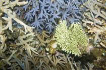Růst a vývoj korálů je velmi závislý na teplotě vody, která se v důsledku klimatických změn rapidně mění.