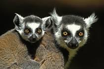 Madagaskar, ilustrační foto