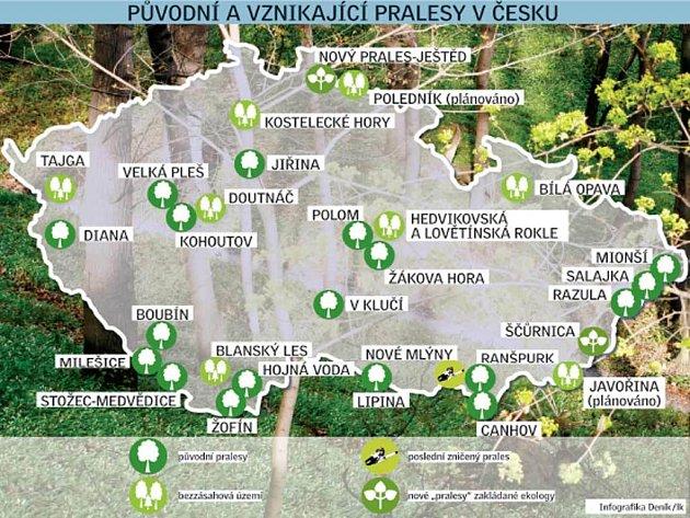 Pralesy v Česku