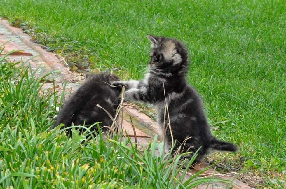 Koťata v přírodě