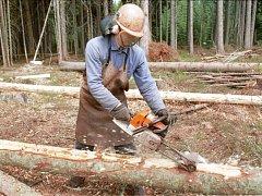 Prořezáním hustých stromů se les prosvětlí, zůstanou v něm jen vybrané silné odolné smrky s velkými a hlubokými korunami, které jsou od sebe vzdálené i čtyři metry. Ilustrační foto.