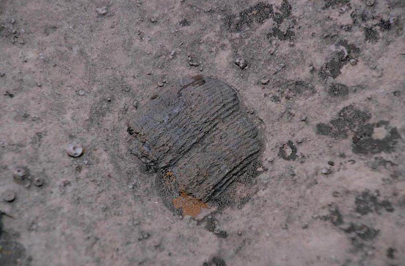 Zkameněliny lilijic lze najít i ve vápencové formaci Kaibab v americkém Grand Canyonu