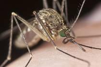 MSF podle svých údajů každoročně ošetří přes milion lidí s malárií ve víc než 30 zemích světa.