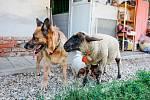 Zvířata v útulku Tibet, který vede Alžběta Humlíčková.