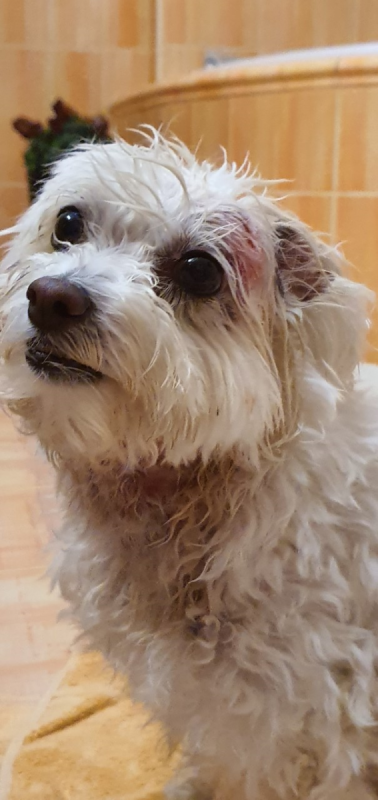 Beky po útoku na labradora. Prohrála v první vteřině.