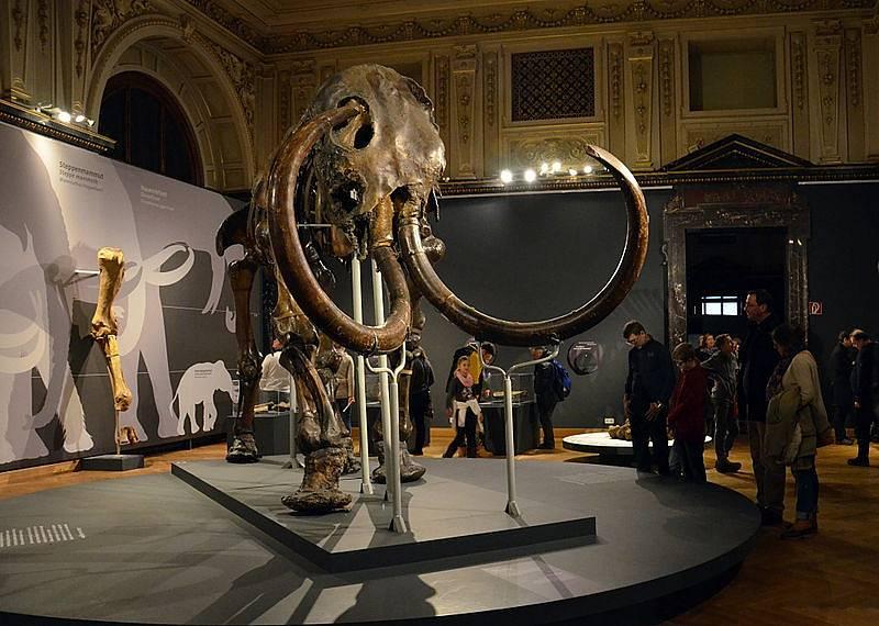 Kostra mamuta v muzeu ve Vídni.