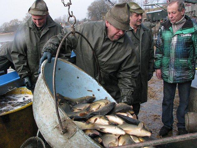 V pondělí začal v Třeboni výlov rybníka Svět, který potrvá až do pátku. Šupináči jsou určeni na velikonoční stůl.