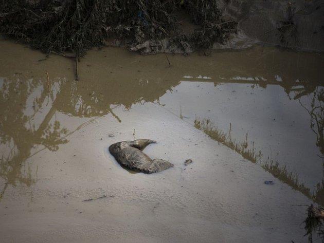 Hlavním úkolem sedmi zkušených chovatelů z českých zoologických zahrad, kteří pomáhali od minulého pondělí v gruzínské metropoli Tbilisi při likvidací následků povodně v místní zoo, bylo vyprošťování mrtvých zvířat z bahna. Ilustrační foto.