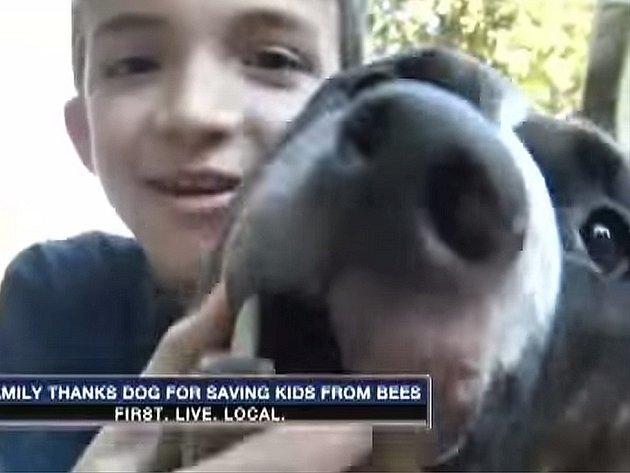 Pitbull zachránil osmiletému chlapci život.