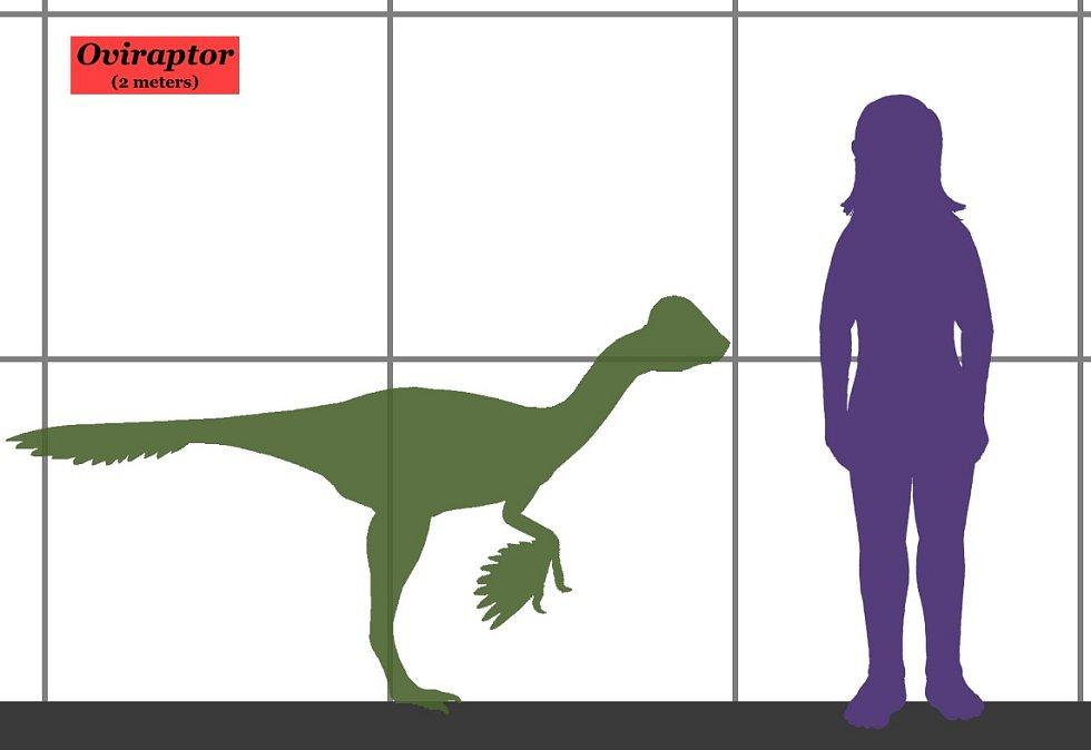 Porovnání velikosti oviraptora s člověkem