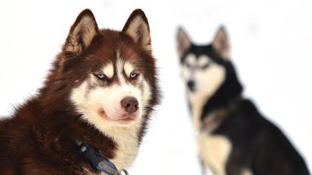 bdb1ca25a31 Pozor na psy z Rumunska