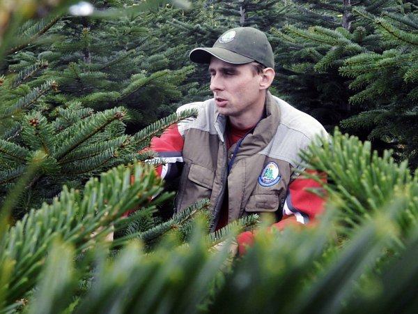 Místopředseda Sdružení pěstitelů vánočních stromečků František Valdman.