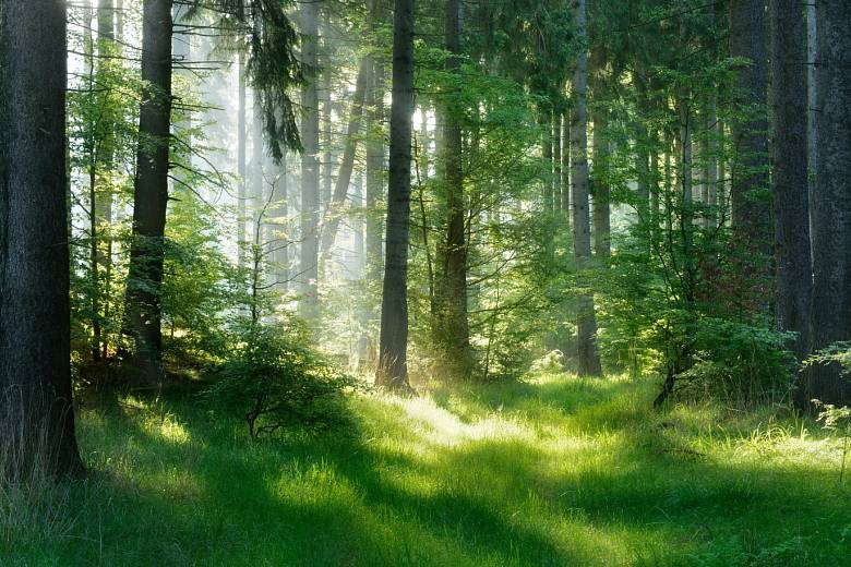 Les. Ilustrační foto.