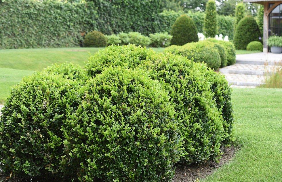 Zimostráz poslouží i jako ozdobný předěl zahrady.